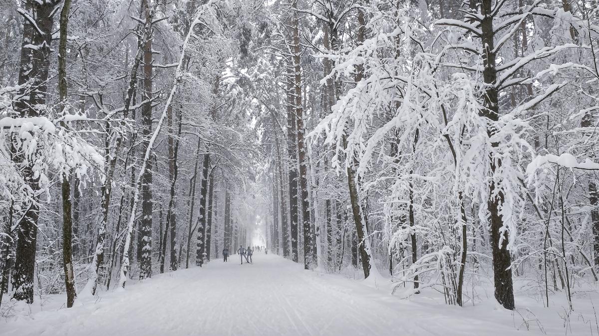 Лыжная трасса в парке Мещерский после снегопада