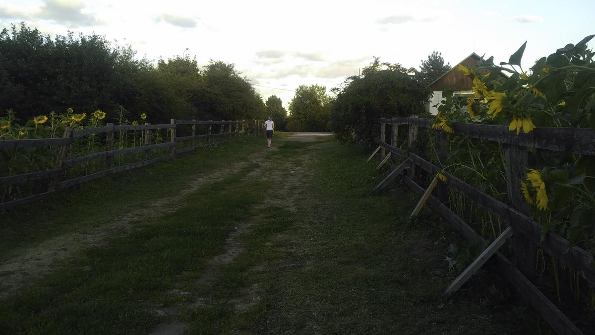 подсолнухи летом в Коломенском