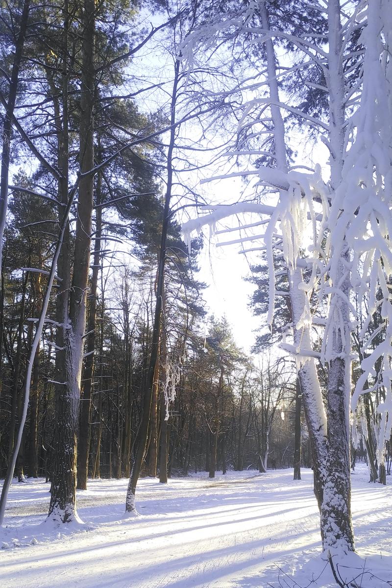 лыжная трасса Волкуша: начало сезона беговых лыж