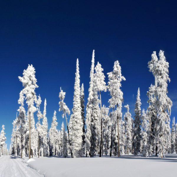 катание на беговых лыжах в заснеженном лесу