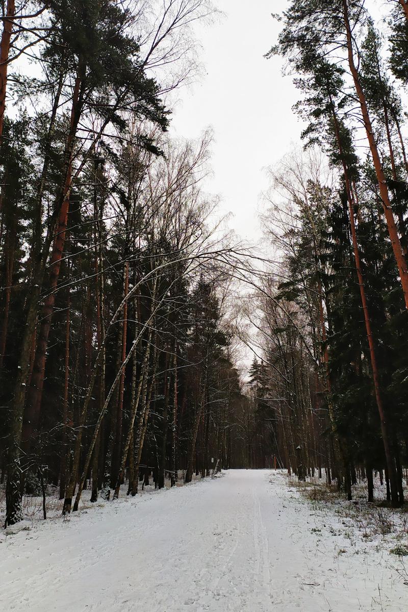 Лыжи в парке Мещерский 9 января 2020